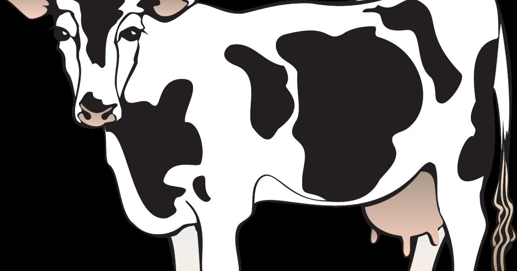 cow cartoon vector - Ahmad4d|free vectors
