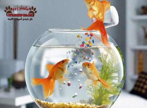 تعرف على أنواع الغذاء المستخدم لأسماك الزينة Fish feeding