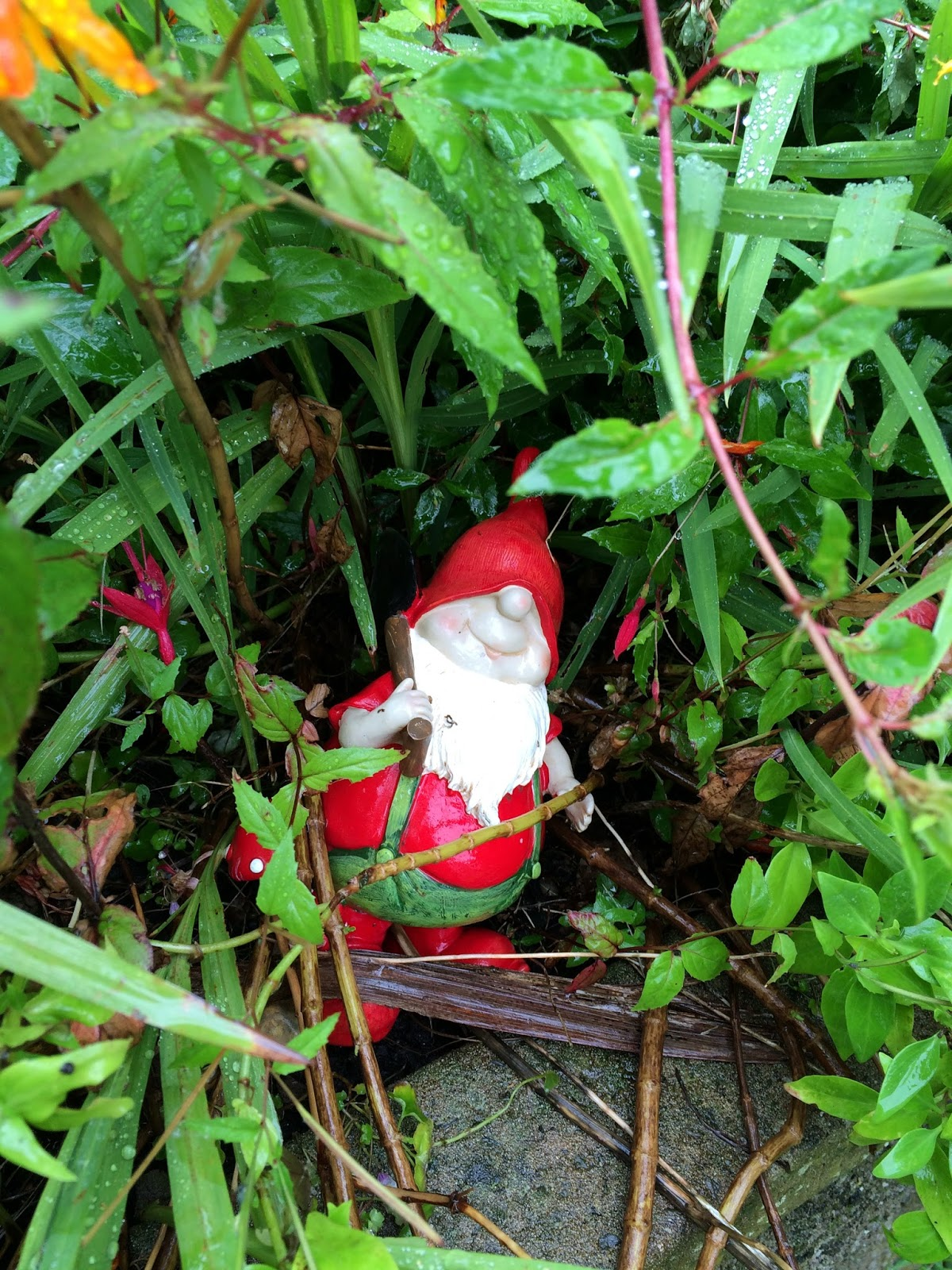 garden clean up - a garden gnome hidden under foliage