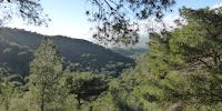 Típico bosque mediterráneo