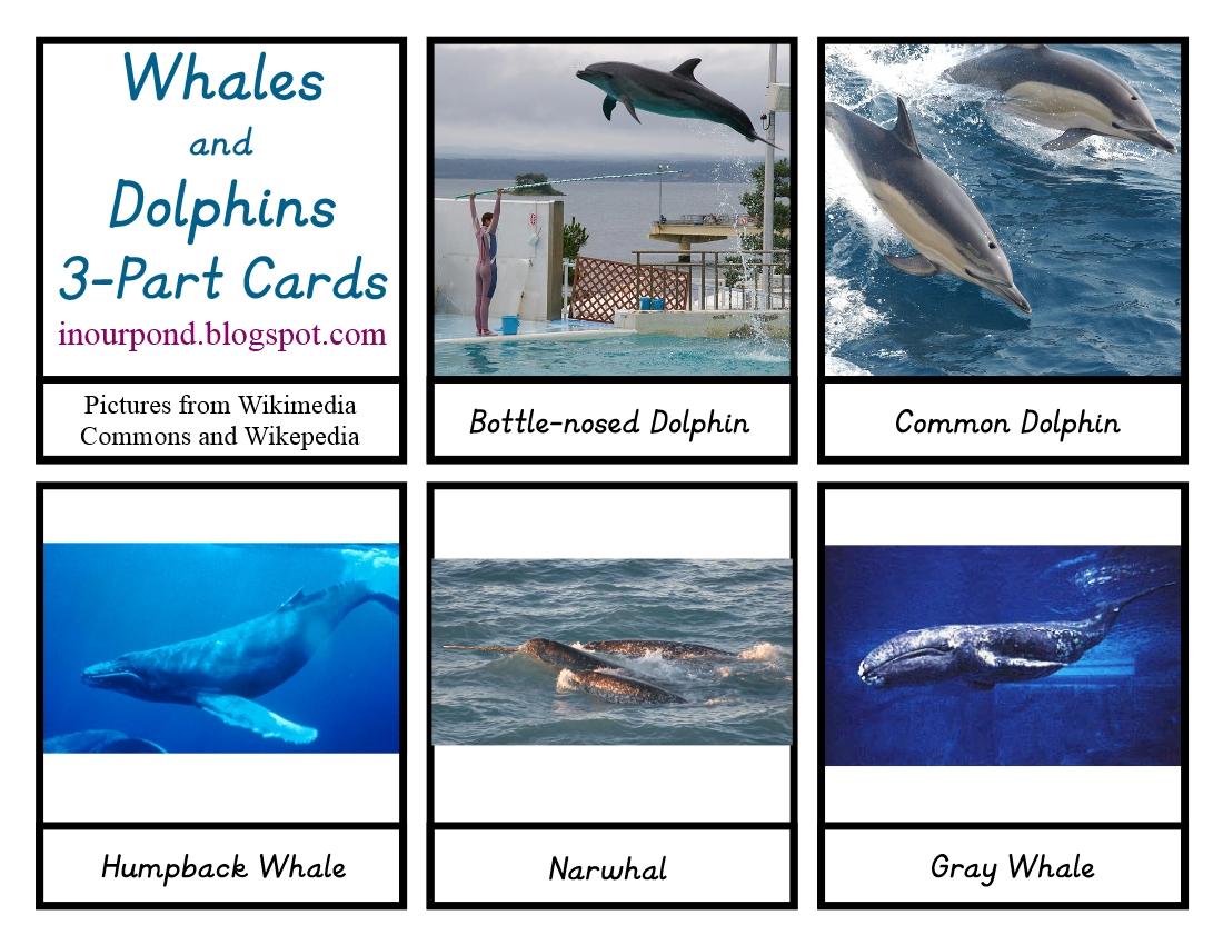 Printable Montessori Cards Digital Download Whales /& Dolphins Safari TOOB Cards