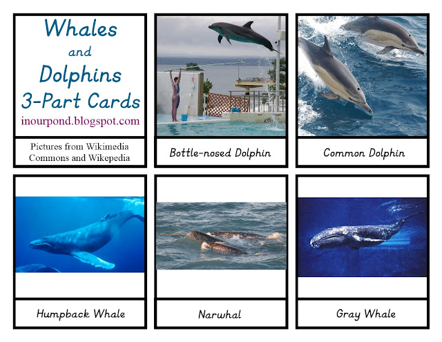 FREE 3-Part Cards for Safari Ltd Dolphins and Whales Toob from In Our Pond