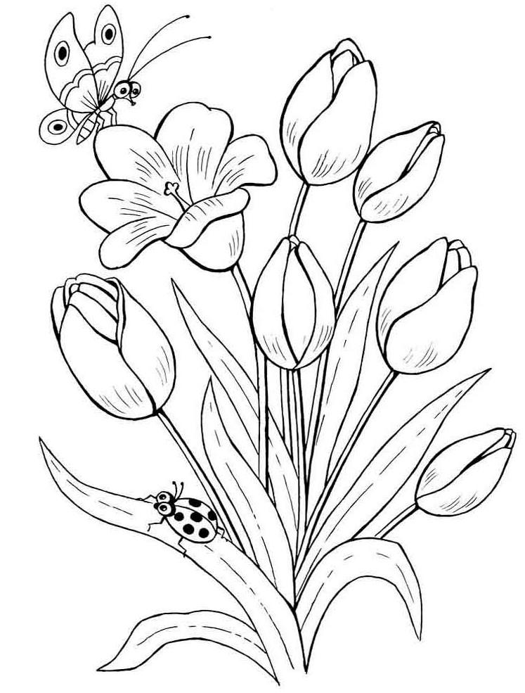 Unduh 820 Koleksi Gambar Bunga Tulip Yang Belum Diwarnai Paling Cantik