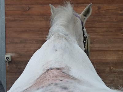 Mein Leben mit meinen Pferden