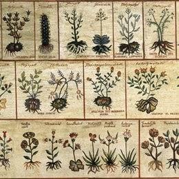 libros gratis de plantas medicinales en pdf