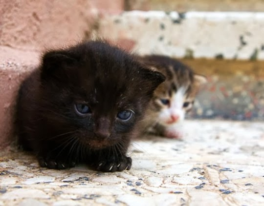 stray kittens of istanbul