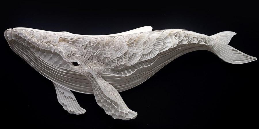 10-Whale-Patrick-Cabral-www-designstack-co