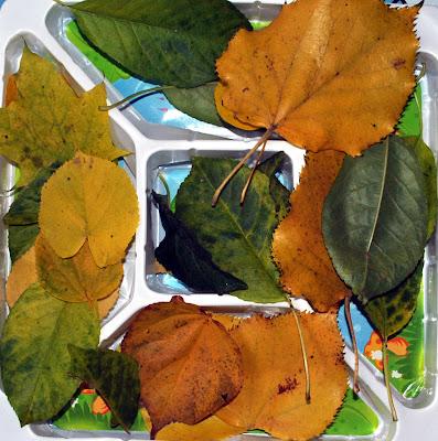 frunze culese din parc