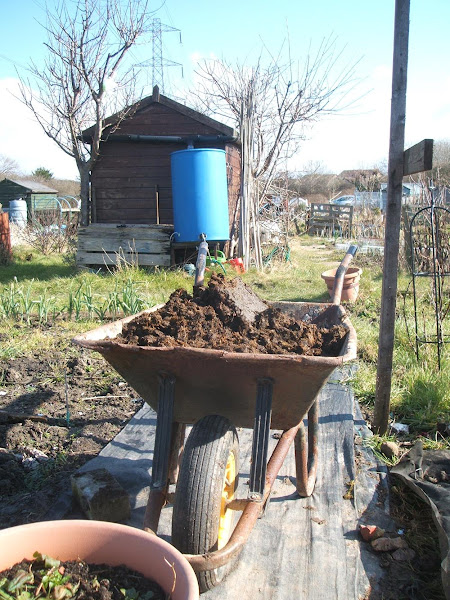 wheelbarrow full of horse manure waiting to be dug into the soil