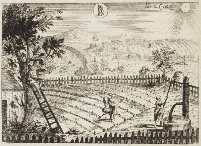 17th century engraving of farm fields, hand irrigation, fruit tree harvesting