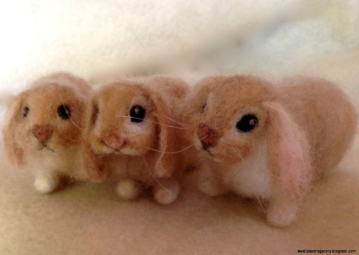 Fluffy Baby Bunnies For Sale | Wallpapers Gallery