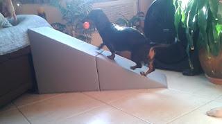 trampas para cães focinho curto