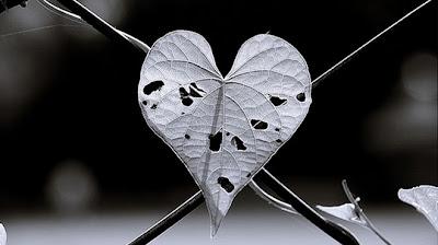 Tình yêu, rốt cục là cái gì