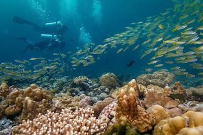 photo at the dive spot ´8 miles rock´ at Koh Lipe