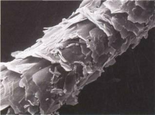 Fibra capilar dañada y porosa