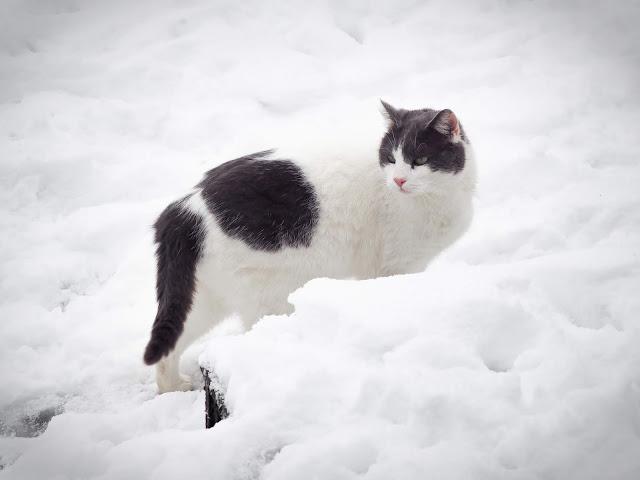 Stitch in de sneeuw