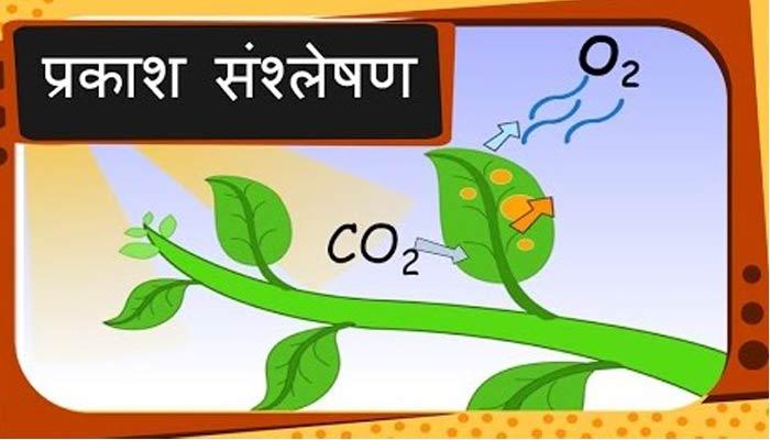 प्रकाश संश्लेषण क्या हैं (Photosynthesis in Hindi)