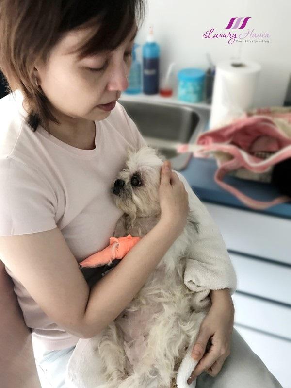singapore 24 hour pet hospitals consultation cost
