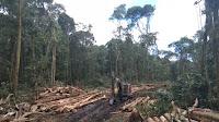 Heboh Penebangan Hutan di Samosir, Hutan Tele Terancam Punah