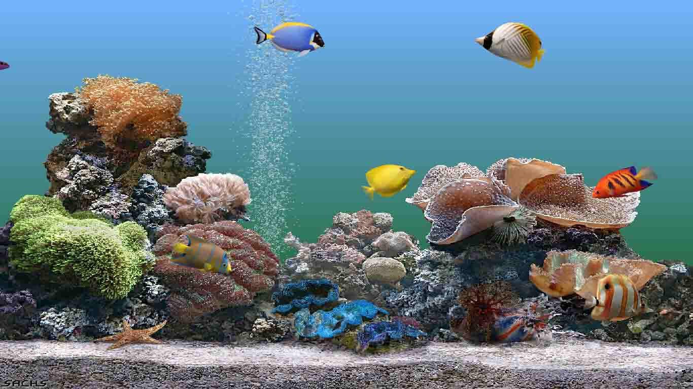 Perleputz aquarium screensaver for Fish tank screen