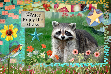 Postcard Raccoon