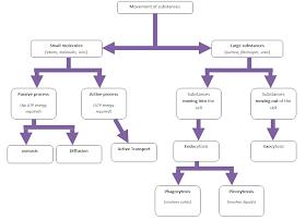 The BioLogs: CSEC - Movement of substances