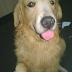 Caso clínico 8: Perro adulto con secreción en el oído