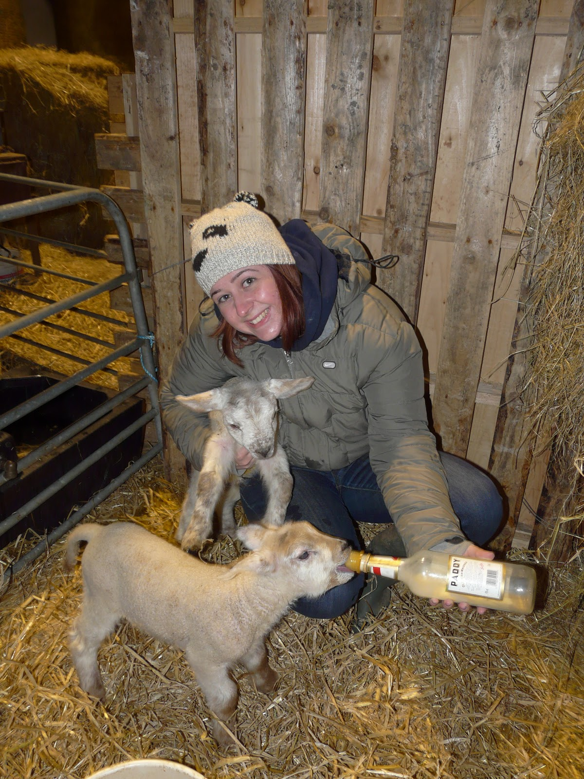 Electrolyte For Sick Lambs