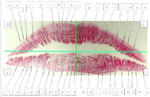 Resultado de imagen para queiloscopia