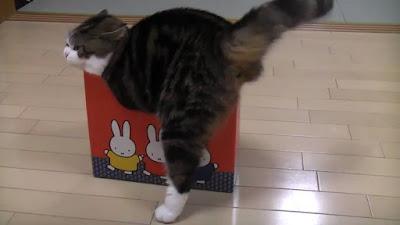 http://kongxie.blogspot.my/2017/06/fakta-kucing-suka-kotak.html