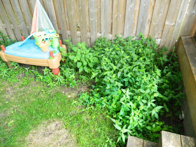 Upper Beaches backyard cleanup before Paul Jung Gardening Services Toronto