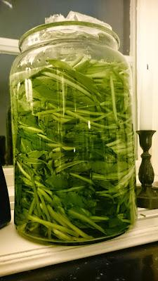 fermenterad ramslök