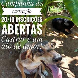 GPA recebe até a sexta 19/10 as inscrições para a campanha de castração de cães e gatos do sábado 20/10
