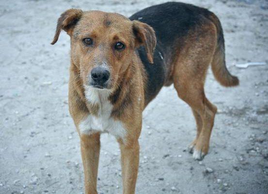 Αλλεπάλληλα κρούσματα δηλητηρίασης αδέσποτων ζώων στην Καλαμπάκα