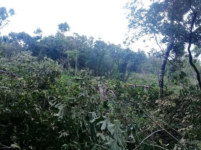 <b>Sempat Diamankan Pelaku Perladangan Liar di Desa Bala, Dilepas Lagi</b>