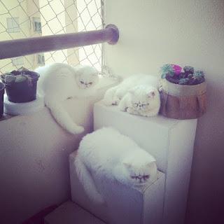 gatos em apartamento
