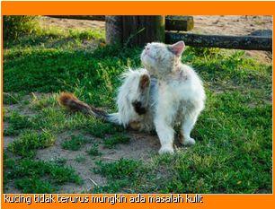 kucing yang tidak terurus mungkin ada masalah jangkitan pada kulit