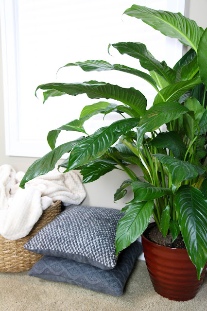 5 Reasons to Add More Plants into Your Living Space