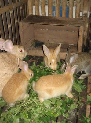 Memelihara kelinci hias di rumah pakan hewan kelinci di dalam rumah lucu