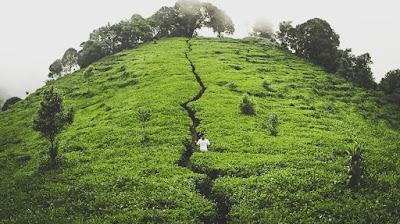 kebun teh promasan ungaran