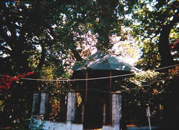 Μυθικά δένδρα
