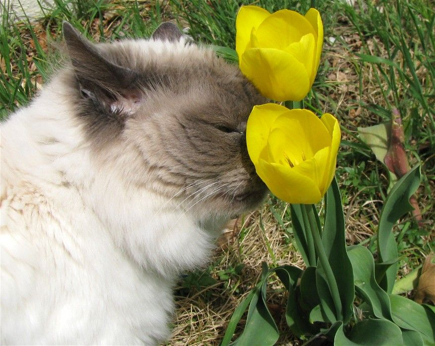 14. Stop and smell the tulips by Joe