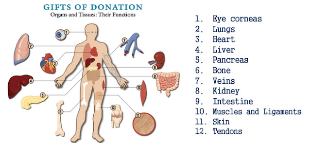 argumentation for donating organs Organ donation organ and tissue donation has become a key part of the healthcare sector the number of patients whose organs are failing continues to increase consequently, the number of those in need of donated organs continues to rise, despite the limited number of donors.
