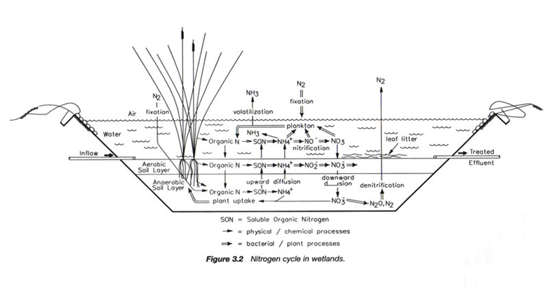 the nitrogen cycle diagram freshwater wetland the nitrogen cycle diagram fau libraries @jupiter science blog: what goes around ... #2