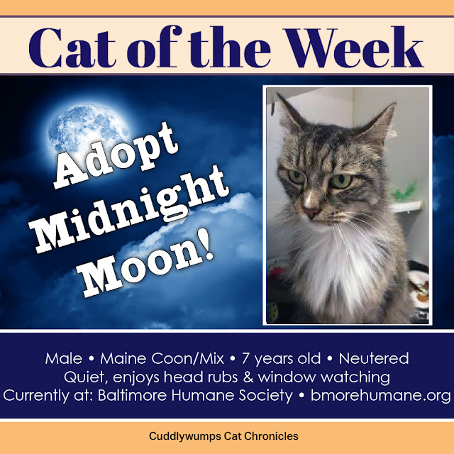 Cat of the Week: Midnight Moon in Baltimore