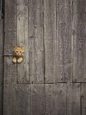 gato atrapado