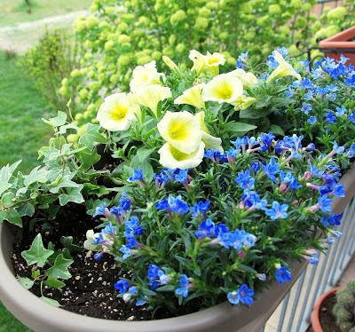 Il mondo in un giardino ancora idee per composizioni in vaso for Fiori per esterno