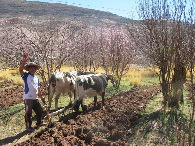 Frühling in den Bergen Boliviens