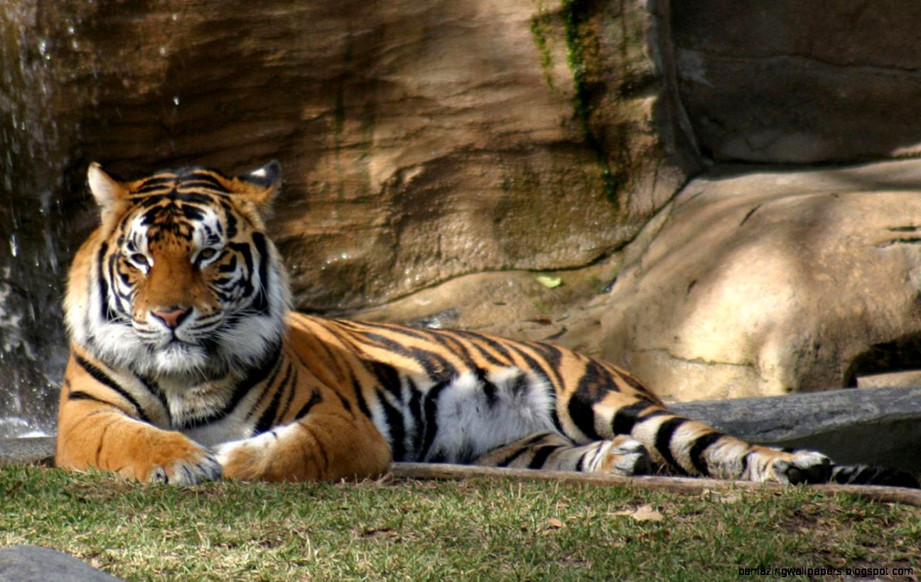 High Resolution Wallpaper Wildlife: Animal Wallpapers High Resolution