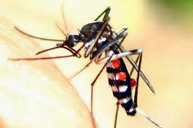 Demam Denggi : Ikhtiar Dengan Set Cadangan Demam Denggi Shaklee